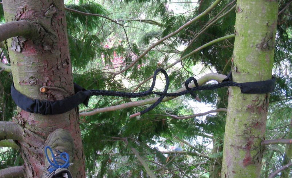 The Things Included in a Tree Removal Service - Jessica Keala