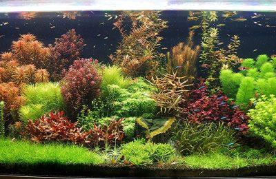 good-quality-of-plants