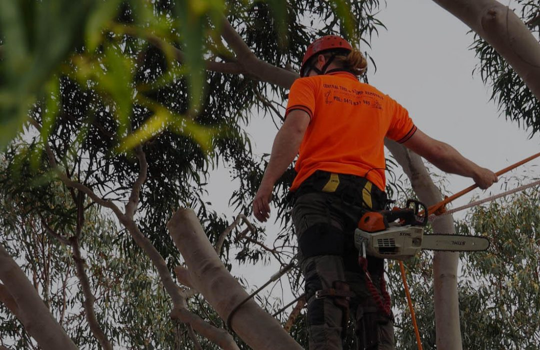davey tree service near me