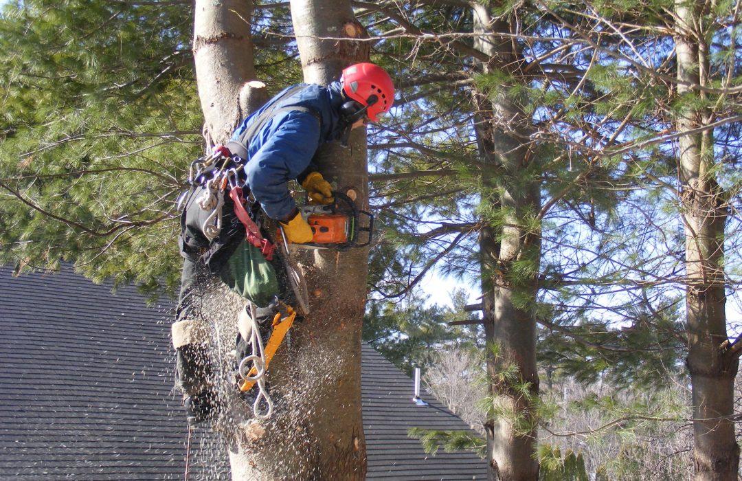 local tree removal service near me